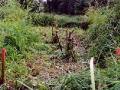 Da die Halbinsel im Sommer 2003 vollkommen zugewachsen war, musste der Standort zunächst  frei geschnitten werden.