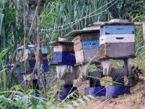 Bienenstöcke auf dem Sítio